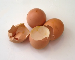 Some broken egg shells