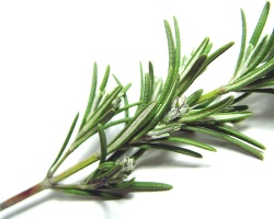 How can I reuse or recycle … dried branches of rosemary?