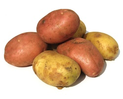 How can I reuse or recycle … old potatoes?