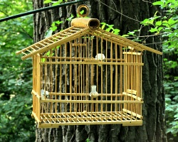 How can I reuse or recycle an old bird cage?