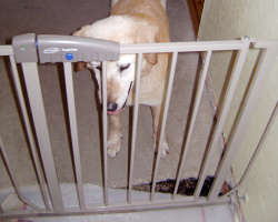 How Can I Reuse Or Recycle Baby Stair Gates And Play Pens How Can