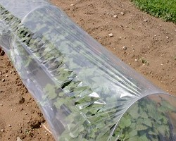 What can I reuse or recycle to make garden cloches row covers